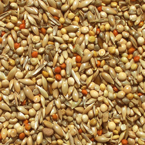 GOULDIAN BREEDERS FINCH SEED MIX - AW BIRDS
